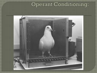 Operant Conditioning: