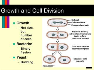 Growth and Cell Division