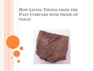 How Living Things from the Past Compare with those of  today
