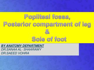 Popliteal fossa ,  Posterior compartment  of  leg   & Sole of  foot