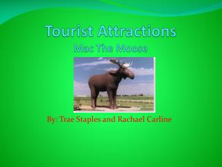 Tourist Attractions Mac The Moose