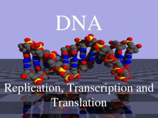 DNA Replication, Transcription and Translation