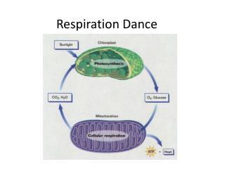 Respiration Dance