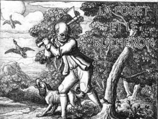LA FORET ET LE BUCHERON