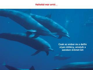 Csak az ember  s a delfin olyan  lol ny, amelyik a szexben  r m t leli
