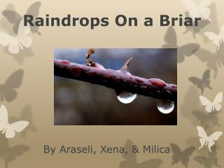 Raindrops On a Briar