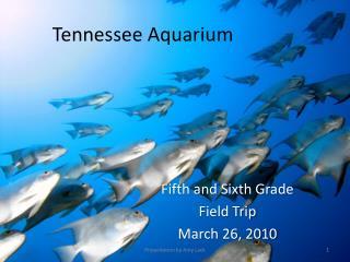 Tennessee Aquariu m