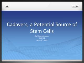 Cadavers, a Potential Source of Stem Cells