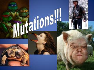 Mutations!!!