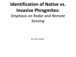 Identification of Native  vs . Invasive  Phragmites : Emphasis on Radar and Remote Sensing