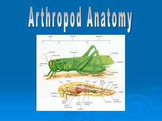 Arthropod Anatomy