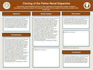 Cloning of the Feline Renal Dopamine
