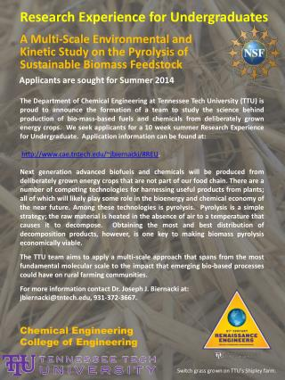 A Multi-Scale Environmental and Kinetic Study on the Pyrolysis of Sustainable Biomass Feedstock
