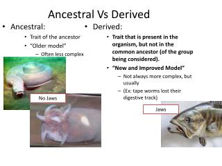 Ancestral Vs Derived