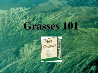Grasses 101