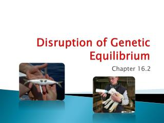 Disruption of Genetic Equilibrium