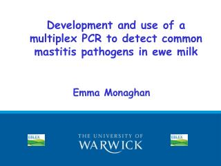 Development and use of a multiplex PCR to detect common mastitis pathogens in ewe milk