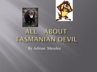 All   About Tasmanian Devil