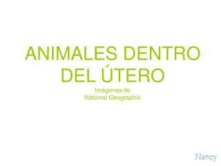 ANIMALES DENTRO DEL  TERO Im genes de  National Geographic