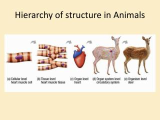 Hierarchy of structure in Animals