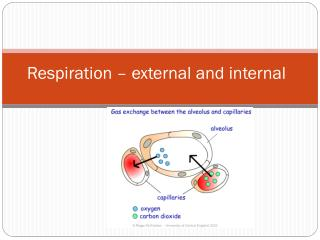 Respiration – external and internal