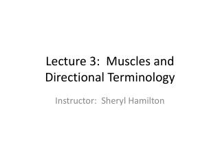 Lecture 3:  Muscles and Directional Terminology