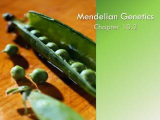Mendelian  Genetics Chapter 10.2