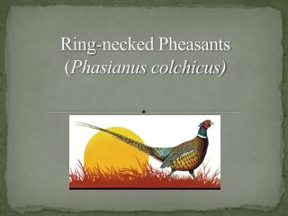 Ring-necked Pheasants Phasianus colchicus