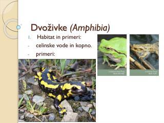 Dvoživke  (Amphibia)