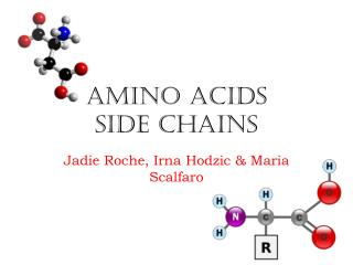 Amino Acids  Side Chains