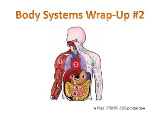 Body Systems Wrap-Up #2