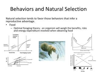 Behaviors and Natural Selection