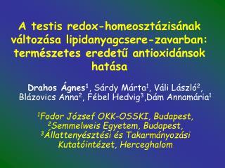 A testis redox-homeoszt zis nak v ltoz sa lipidanyagcsere-zavarban:  term szetes eredetu antioxid nsok hat sa