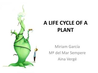 A LIFE CYCLE OF A PLANT