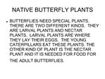 NATIVE BUTTERFLY PLANTS