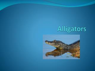 Alligators