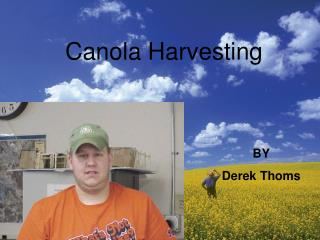 What can be used to harvest canola