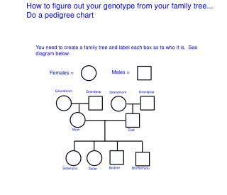How to figure out your genotype from your family tree... Do a pedigree chart