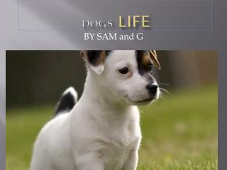 Dogs  life