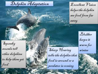 Dolphin Adaptation