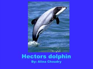 Hectors dolphin By:  Alina Choudry