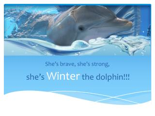 She�s brave, she�s strong, she�s  Winter the dolphin!!!
