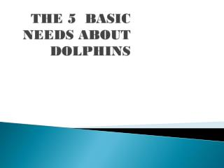 THE 5  BASIC NEEDS ABOUT DOLPHINS