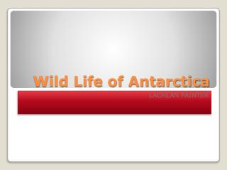 Wild Life of Antarctica
