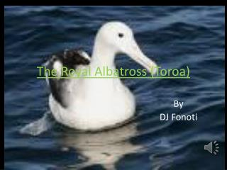 The Royal Albatross (Toroa)