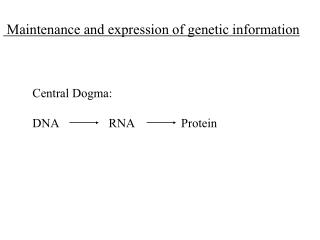 Maintenance and expression of genetic information