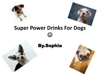 Super Power Drinks For Dogs 