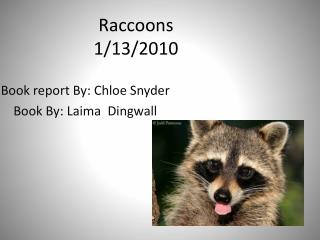 Raccoons 1/13/2010