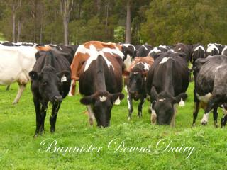 Bannister Downs Dairy