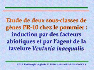 Etude de deux sous-classes de g nes PR-10 chez le pommier : induction par des facteurs abiotiques et par l agent de la t